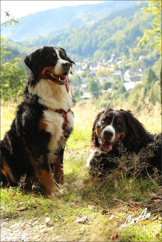 Irmel und Karlos unterwegs in unserem schönen Engnitzgrund. Im Hintergrund ist unser Dorf Blechhammer zu sehen.