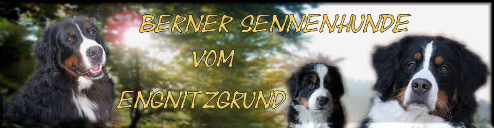 Berner Sennenhunde vom Engnitzgrund – Zuchtstätte des SSV