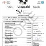 Ahnentafel-Irmel