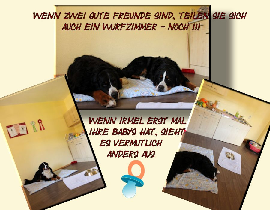 collage wurfzimmer