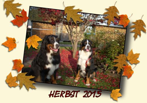 Herbst 2015 Karlos und Irmel